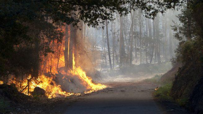 El bosque esta ardiendo