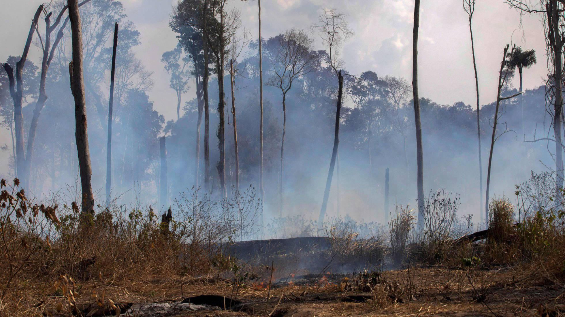 Un año más... el bosque esta ardiendo